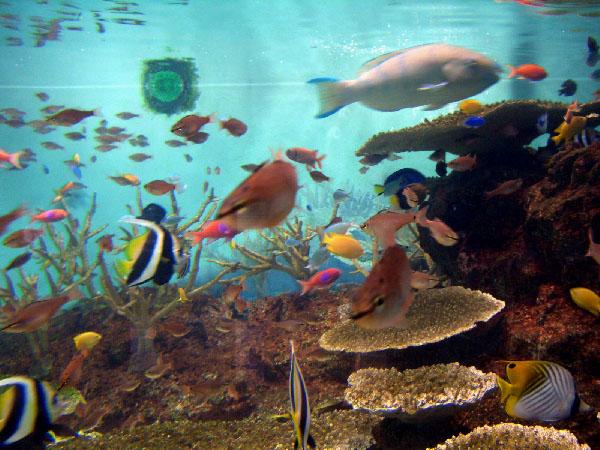 長崎ペンギン水族館の珊瑚の海